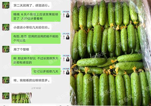 黄瓜上使用什么肥料促开花结果?
