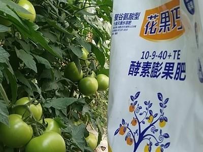 番茄上使用什么品牌的膨果肥效果好?