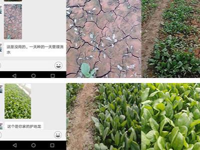 山东阳谷县蔬菜种植户孟大哥