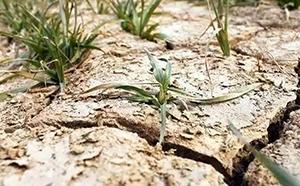 土壤环境差