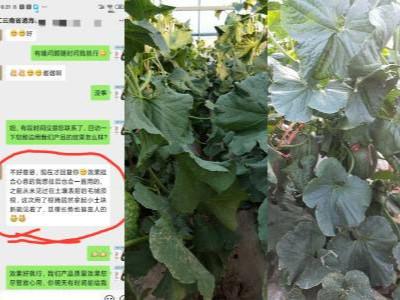 云南哈密瓜用什么牌子的微生物菌肥好?