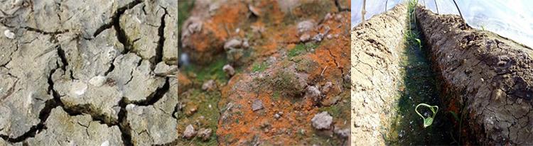土壤颜色不同的原因?微生物菌剂效果如何?