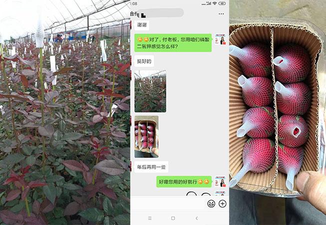 云南玉溪花卉种植户付经理