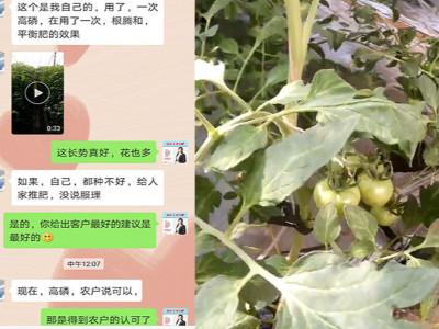 什么品牌的肥料对番茄苗长势好?