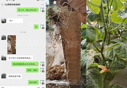 黄瓜生根用什么肥料好,稼乐夫微生物菌剂厂家