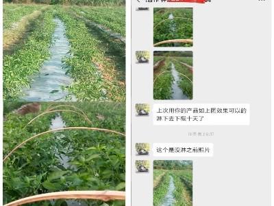 广东惠州辣椒种植户钟大哥——稼乐夫水溶肥客户案例