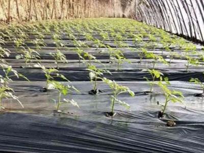 番茄上施肥选择什么品牌的水溶肥效果好?