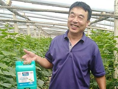 菏泽郓城黄瓜种植户吕大哥——稼乐夫水溶肥客户案例
