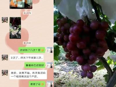 葡萄上转色好用什么叶面肥?