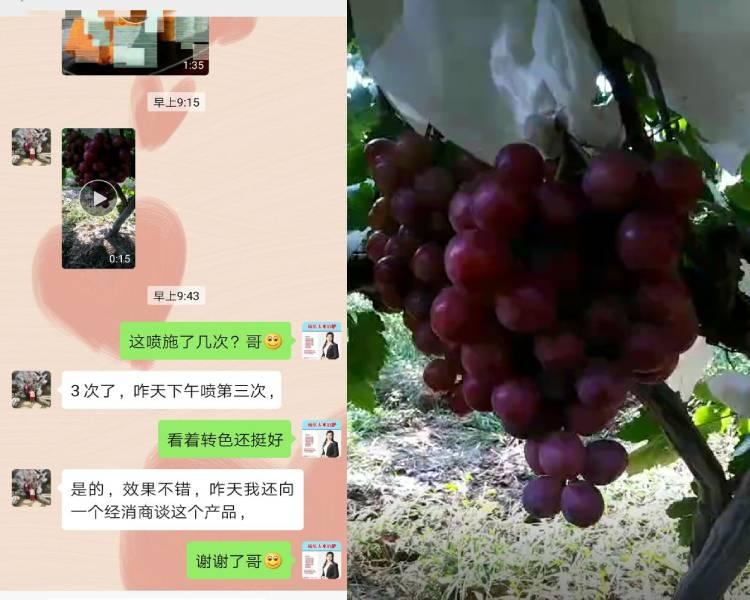 陕西省蒲城县葡萄种植户秦经理