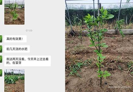 湖北柑橘种植户袁大哥