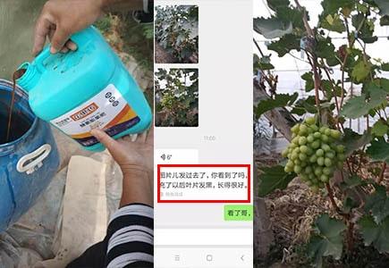 大连瓦房店苹果种植户赵大哥