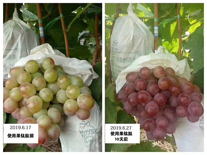 山西运城葡萄种植户张大姐