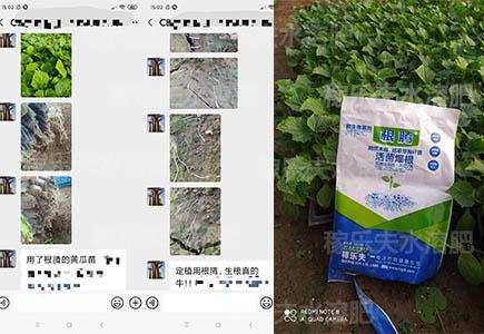 黄瓜苗育苗用什么肥料长势好,稼乐夫微生物菌剂