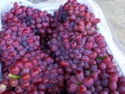 葡萄二次膨果期用什么水溶肥好?