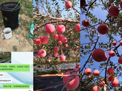 陕西韩城苹果种植户高经理——稼乐夫水溶肥客户案例