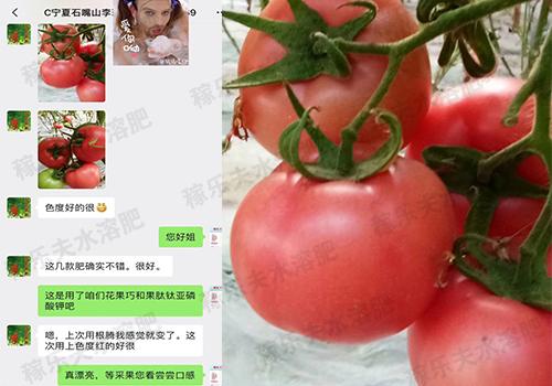 宁夏石嘴山番茄上使用