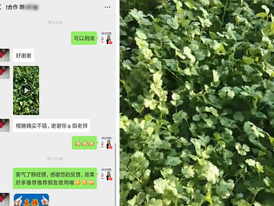 内蒙古通辽市香菜种植户韩经理——稼乐夫水溶肥客户案例