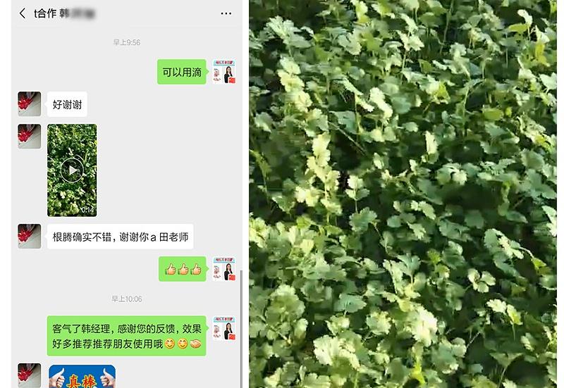 内蒙古通辽市香菜种植户韩灵敏