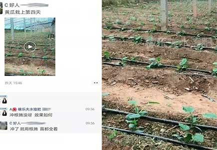 黄瓜微生物肥料,水溶肥