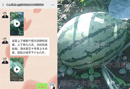 西瓜种植用什么水溶肥长势好?