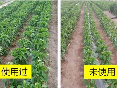 辣椒上施肥选择什么肥料效果好?