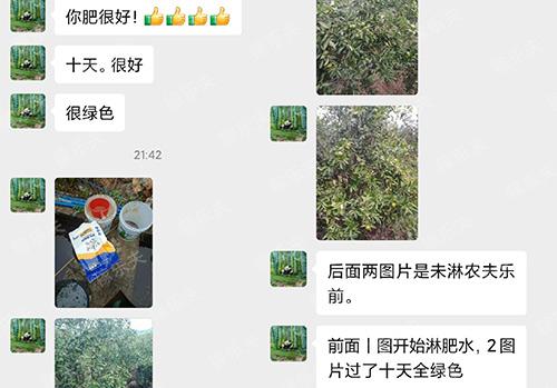 柑橘树上施用稼乐夫水溶肥效果反馈,稼乐夫水溶肥