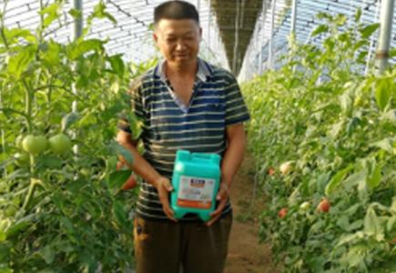 番茄种植户田哥