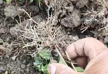 苗木用什么肥料生根好,微生物菌剂,水溶肥