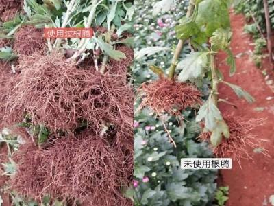 云南昆明晋宁县花卉种植户吴洪艳——稼乐夫水溶肥客户案例