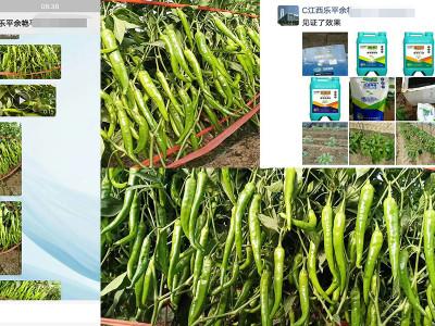 江西地区辣椒上用什么肥料效果好?