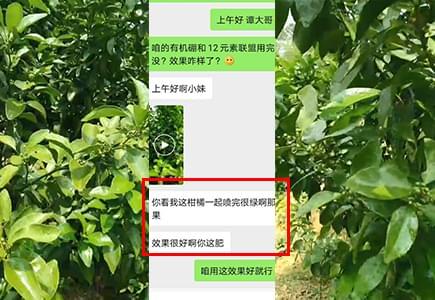 广东柑橘上使用