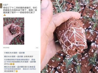 云南昆明宜良县杨经理——稼乐夫水溶肥客户案例