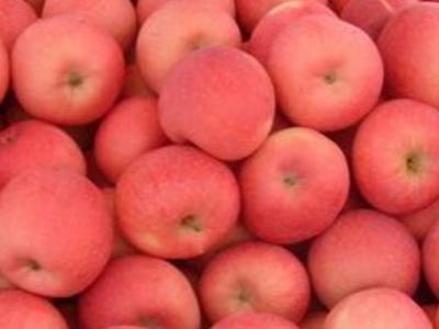 苹果生长过程中对环境的要求