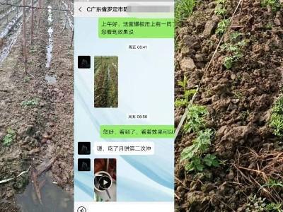 广东罗定市苦瓜种植户陈大哥——稼乐夫水溶肥客户案例