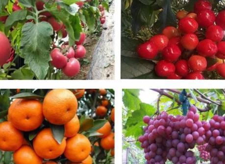 果肽钛转色的果实