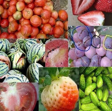激素转色的果实