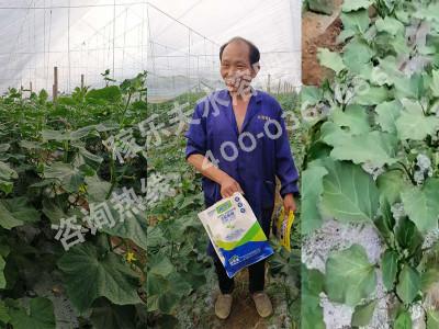 河南漯河临颍县种植户张大哥——稼乐夫水溶肥客户案例