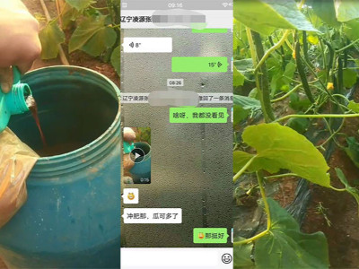 黄瓜上使用什么肥料长势效果好?
