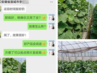 安徽宣城蔬菜种植户李经理——稼乐夫水溶肥客户案例