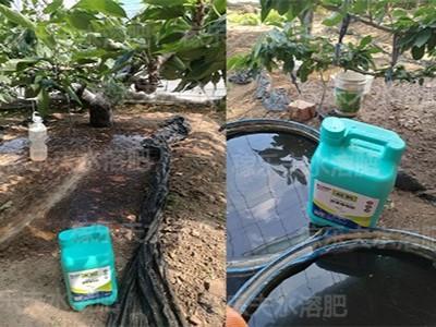 大樱桃水溶肥选择什么牌子根好叶绿?