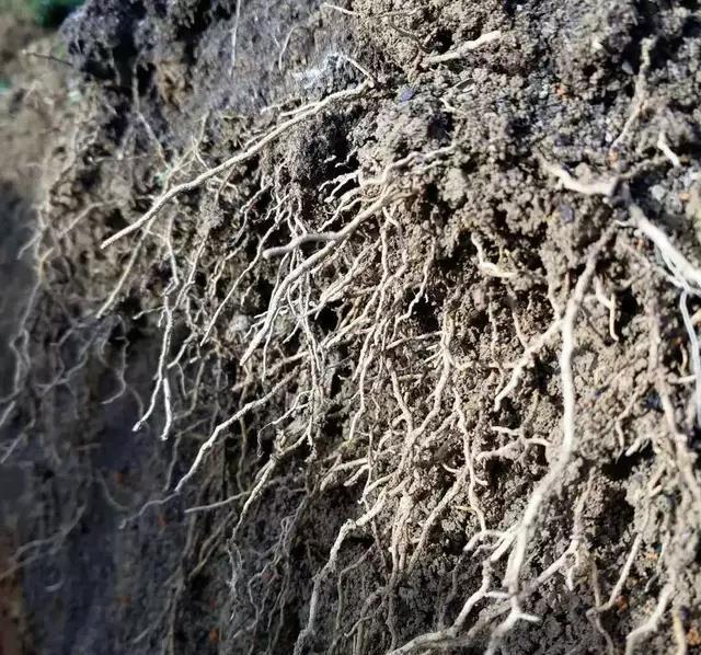 果树根系,稼乐夫水溶肥