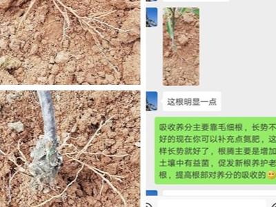 四川资中柑橘种植户李经理——稼乐夫水溶肥客户案例