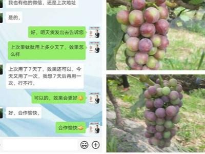 陕西西安葡萄种植户王经理——稼乐夫水溶肥客户案例