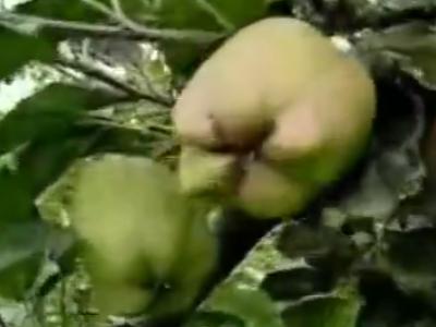 苹果上补充营养用什么叶面肥?