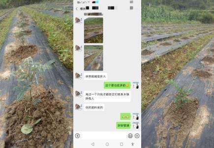 广西柳州山豆根种植户梁经理