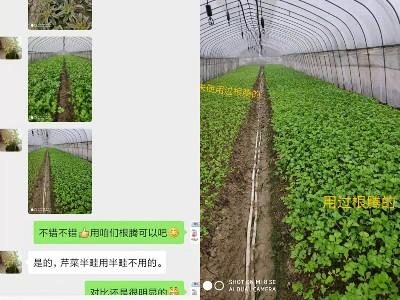 芹菜生根难用什么品牌的肥料能促生根?