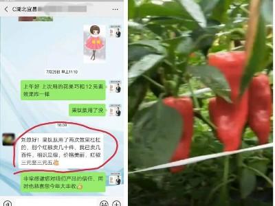 辣椒上使用什么品牌的叶面肥品质好?