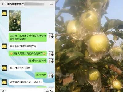 苹果使用什么叶面肥效果好?