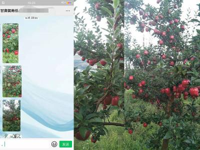 苹果上用高钾膨果肥选什么品牌?